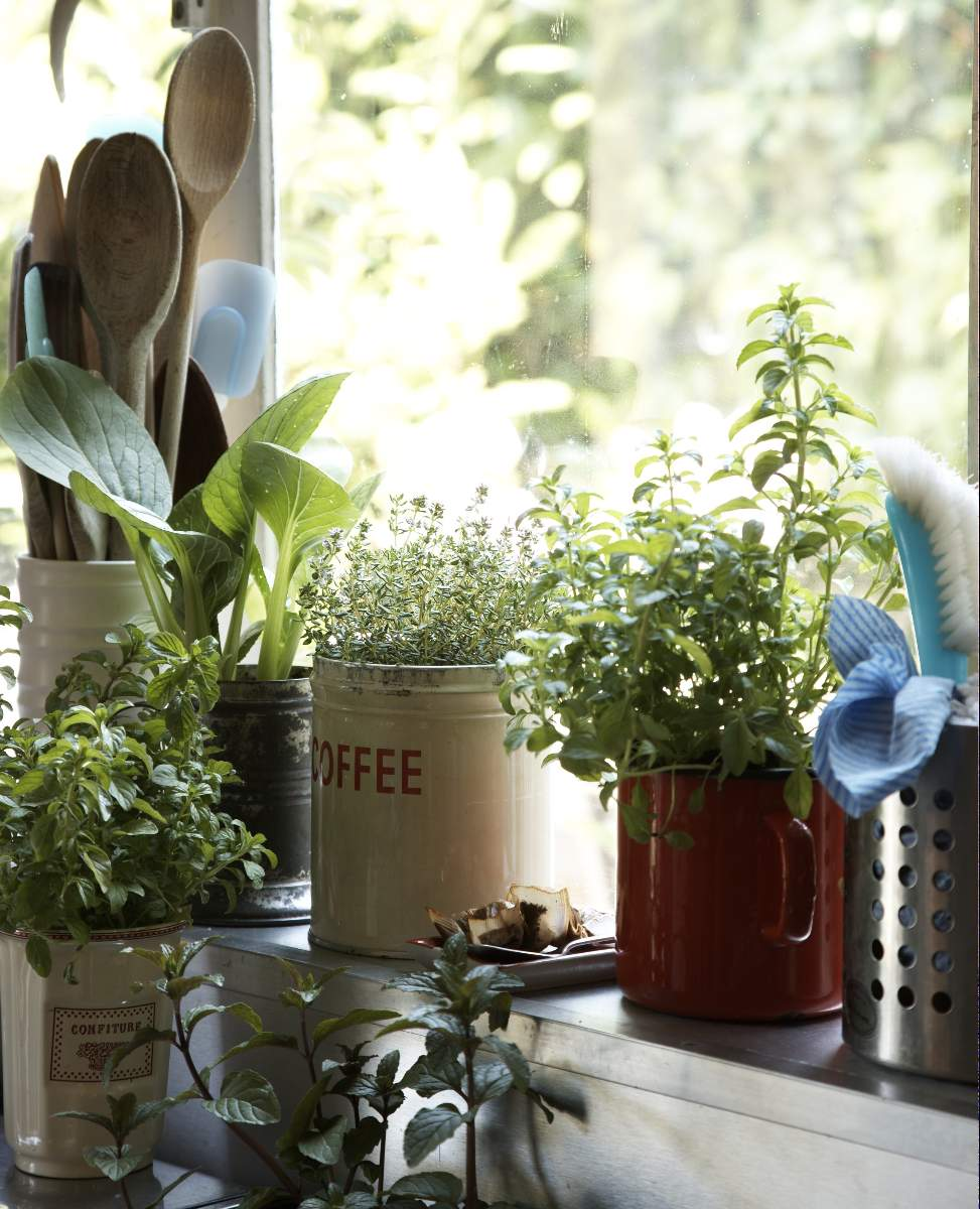 indoor garden during winter mindful living network