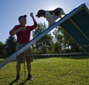 Owner leading dog over A-frame