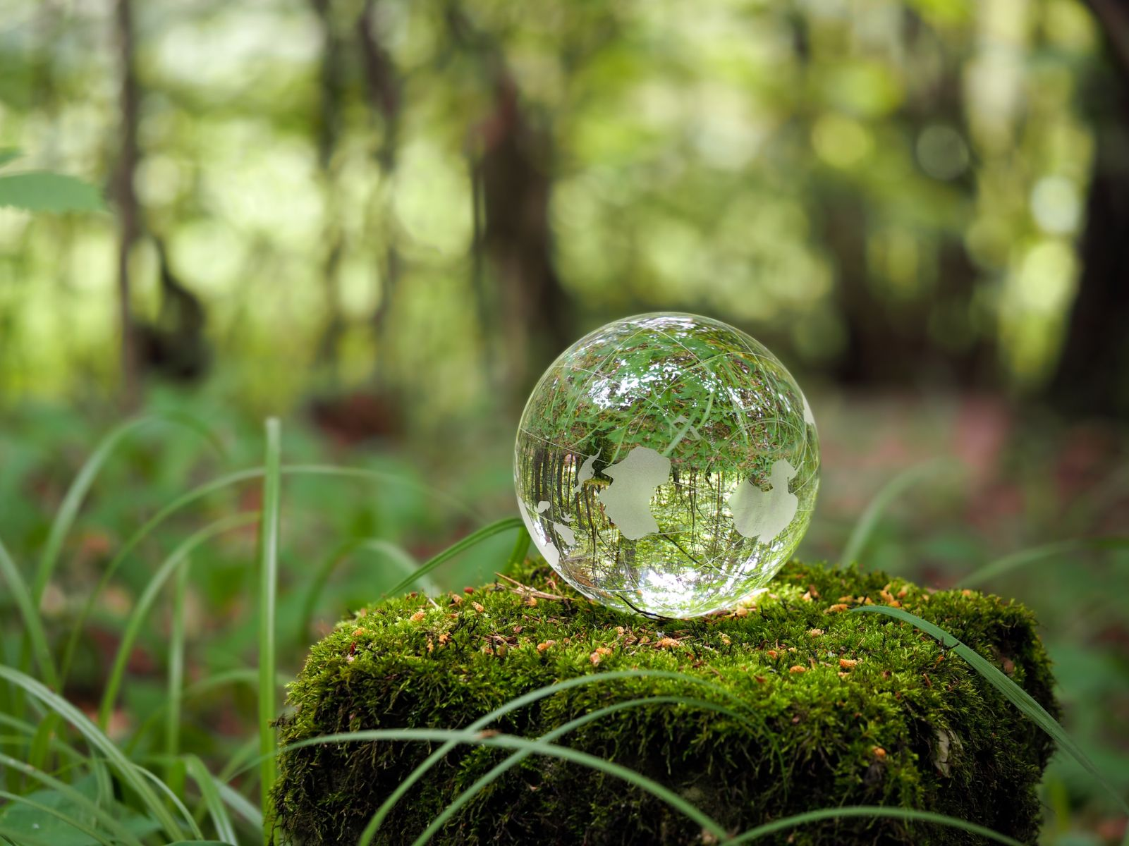 Globe in the forest. Ball on a stump with moss.