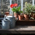 Wood potting table in a greenhouse.