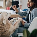 Smiling young african american businesswoman playing with golden retriever dog in office