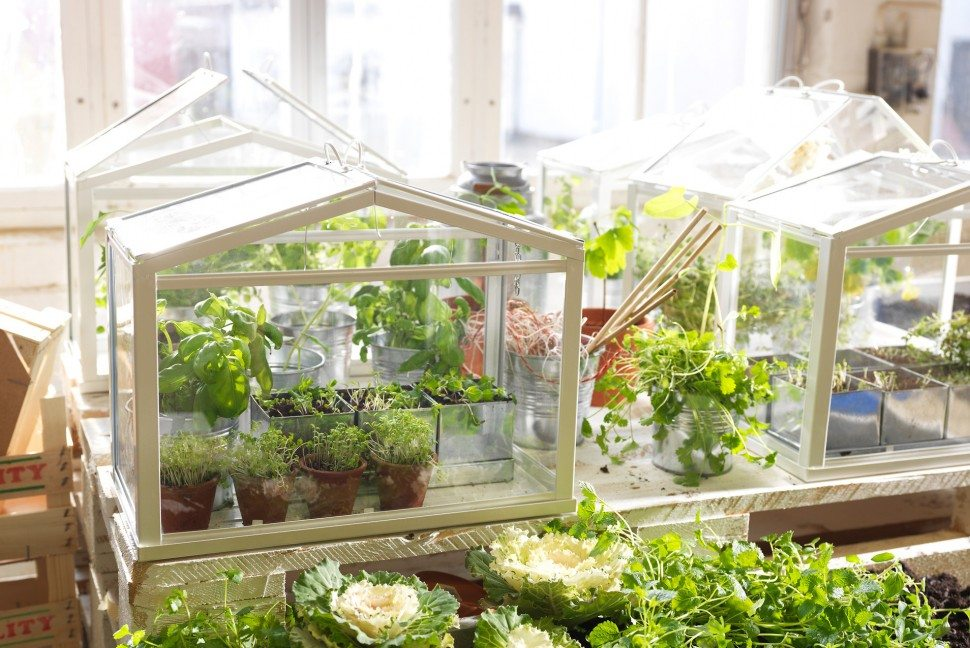 Mindful, Mindful Gardening, Gardening, Mindful Green Living, Green Living, Mindful Living Network, Mindful Living, Dr. Kathleen Hall, The Stress Institute, OurMLN.com, MLN, Alter Your Life,