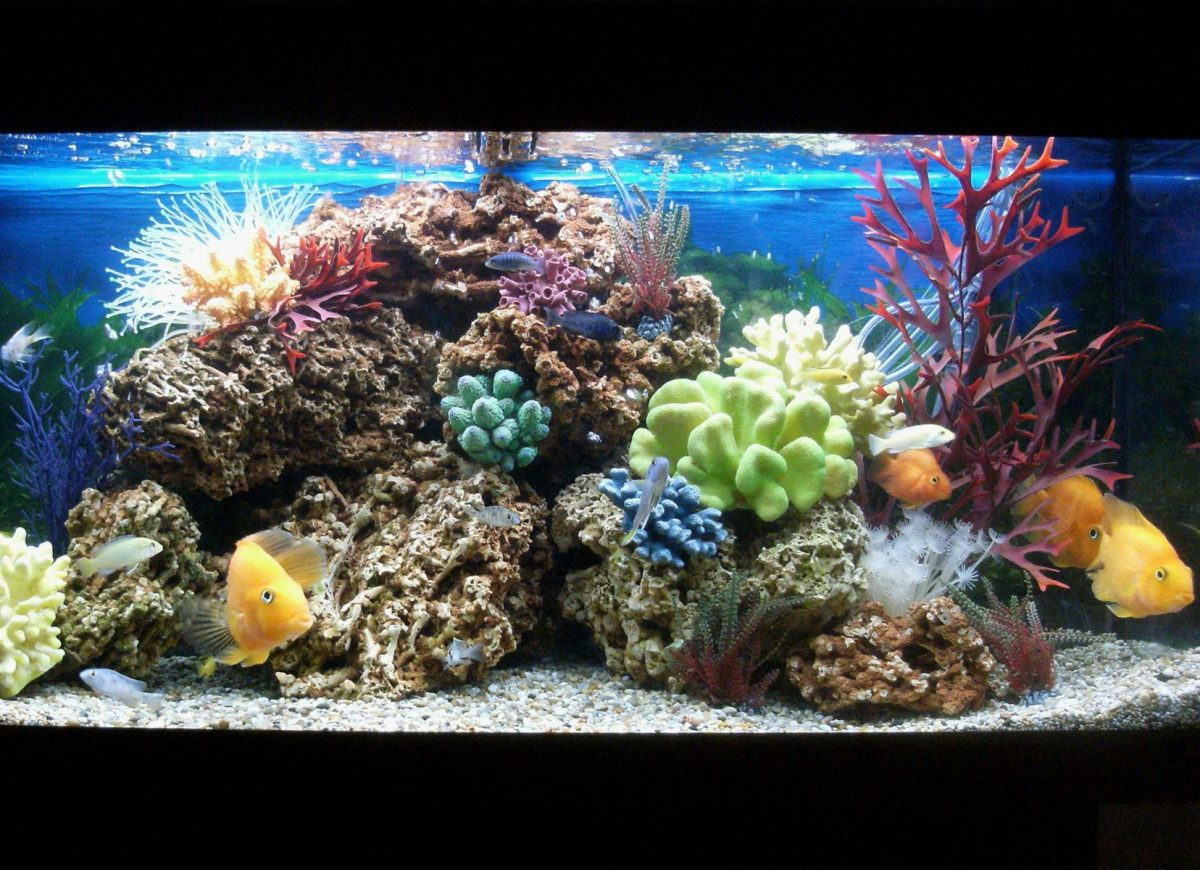 National AquariumMonth