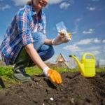 late summer garden crops, vegetable garden,