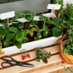 container gardening tips, Mindful Family, plant containers