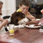 Toxic Foods for Dogs, toxic to dogs